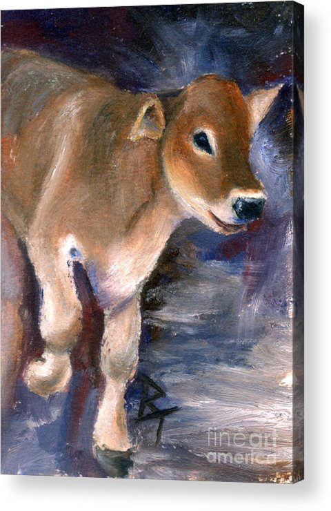 Cow Acrylic Print featuring the painting Brown Swiss Calf Aceo by Brenda Thour