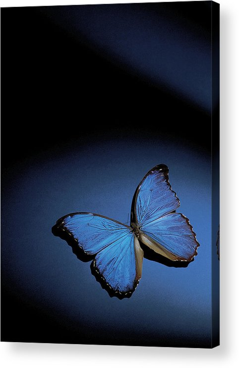 Vertical Acrylic Print featuring the photograph Close-up Of A Blue Butterfly by Stockbyte