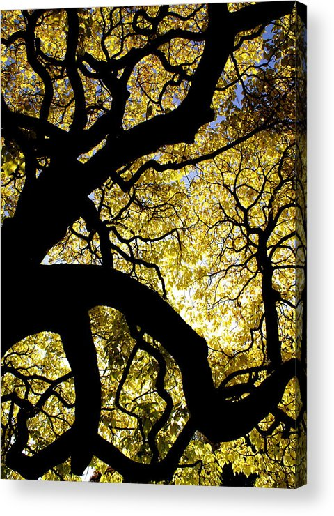 Fall Season Acrylic Print featuring the photograph Dangerous Curves by Sonja Anderson