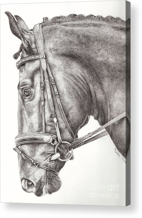 Horse Acrylic Print featuring the drawing Dobbin by Karen Townsend