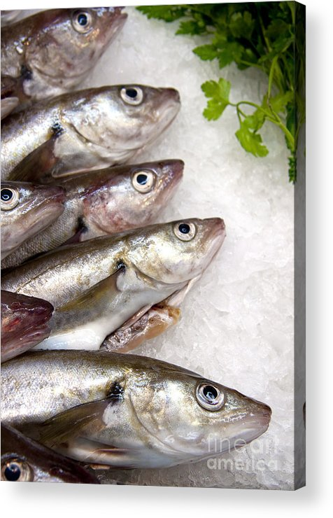 Animal Acrylic Print featuring the photograph Fish On Ice by Jane Rix