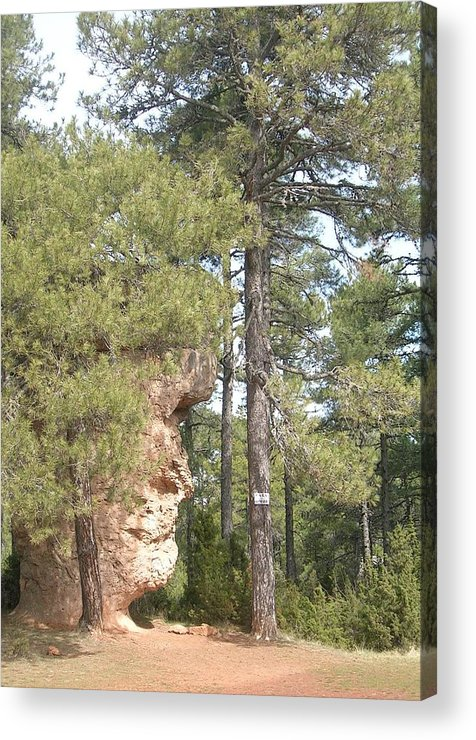Landscape Acrylic Print featuring the photograph Forest Face by Valerie Ornstein