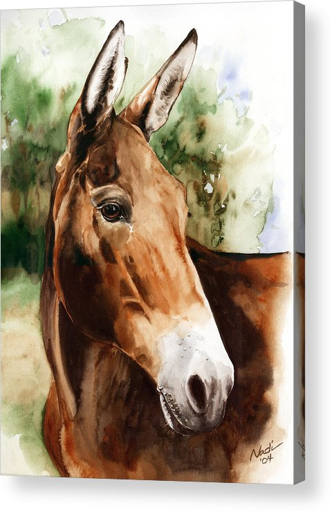 Mule Acrylic Print featuring the painting Francis by Nadi Spencer