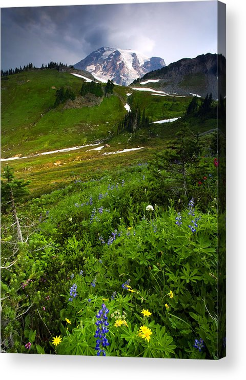 Rainier Acrylic Print featuring the photograph From The Top by Mike Dawson