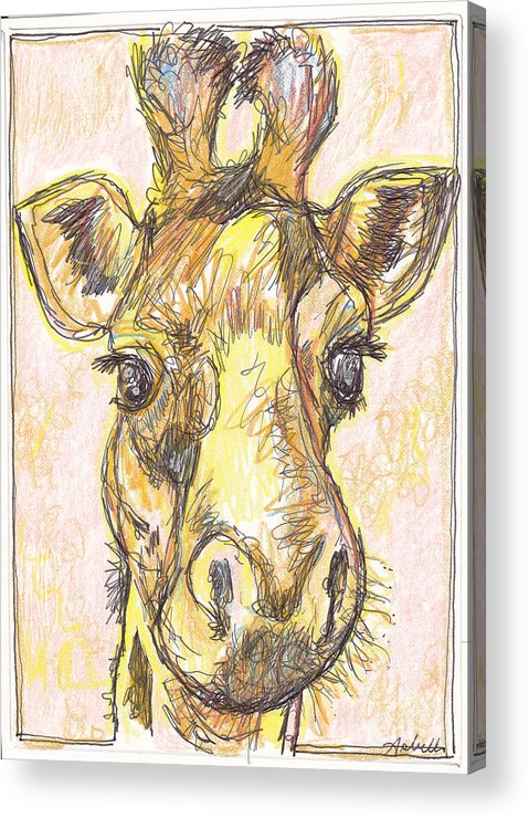 Giraffe Acrylic Print featuring the drawing Giraffe Postcard by Michele Hollister - for Nancy Asbell