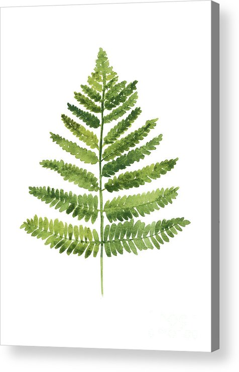 Ferns Acrylic Print featuring the painting Green Ferns Watercolor Poster by Joanna Szmerdt