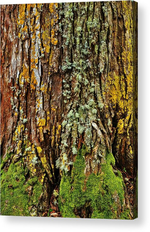 Tree Acrylic Print featuring the photograph Island Moss by JAMART Photography