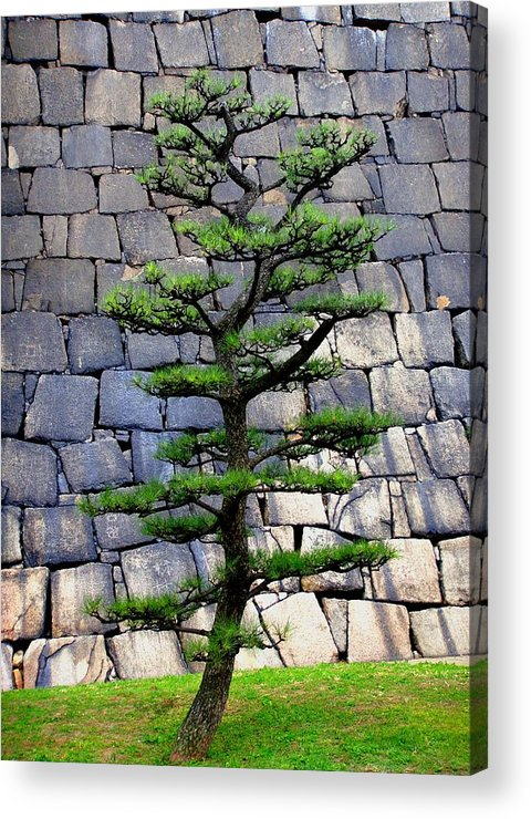 Japan Acrylic Print featuring the photograph Japanese Tree by Roberto Alamino