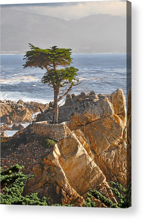 Pine Acrylic Print featuring the photograph Lone Cypress - The Icon Of Pebble Beach California by Christine Till