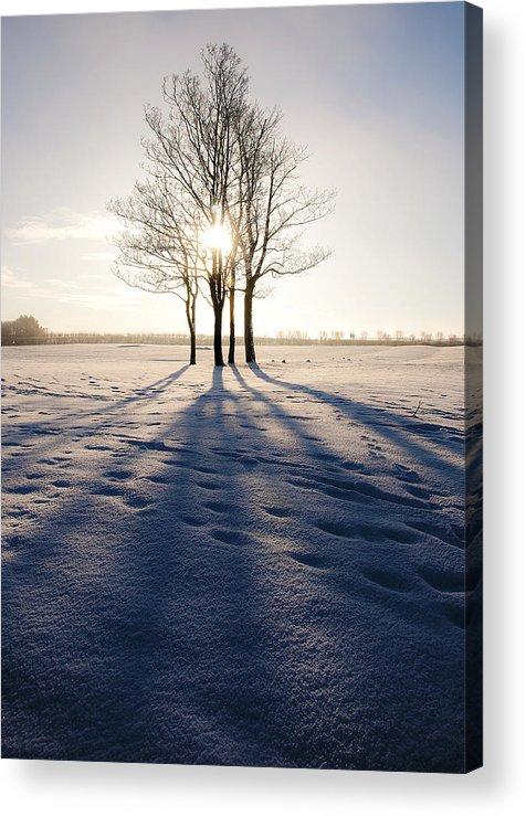 Art Acrylic Print featuring the photograph Long Shadows by Svetlana Sewell