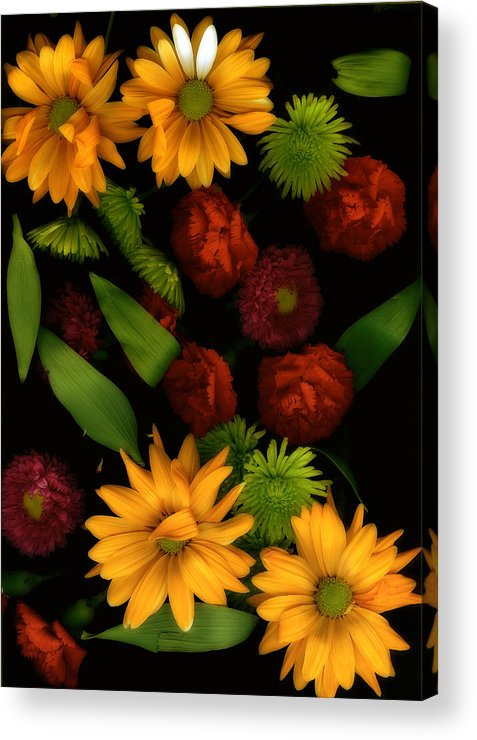 Gerbera Daisies Acrylic Print featuring the photograph Nature's Song by Bonnie Bruno