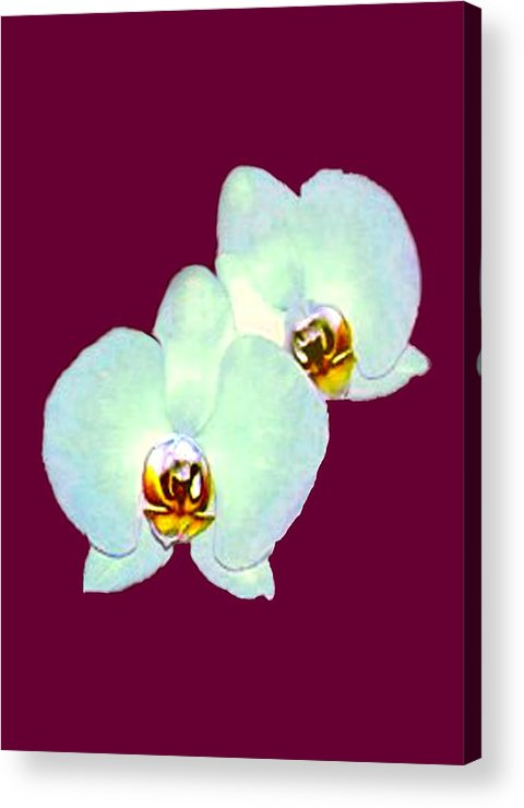 Orchid Art 5 Purple Zurich 2000 Jgibney The Museum Zazzle Gifts Acrylic Print featuring the mixed media Orchid Art 5 Purple Zurich 2000 Jgibney The Museum Zazzle Gifts by jGibney