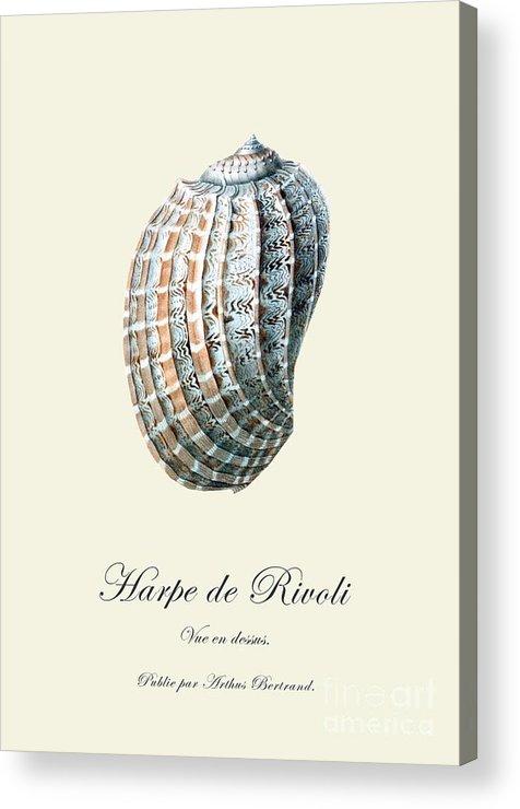 Sea Shell Acrylic Print featuring the drawing Sea Shell by Patruschka Hetterschij