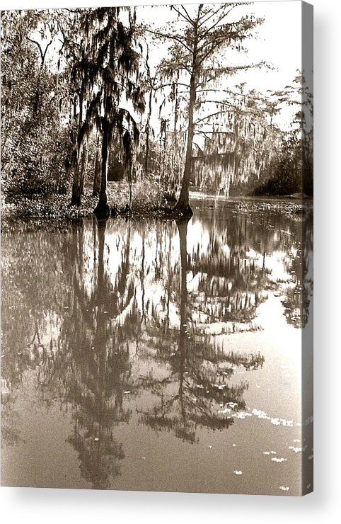 Photograph Acrylic Print featuring the photograph Stillness In The Glades by Patricia Bigelow