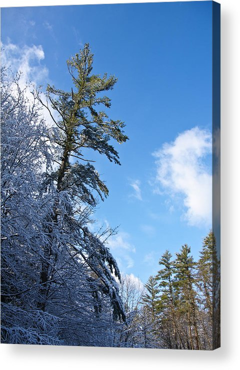 Winter Acrylic Print featuring the photograph Winter Tree And Sky by Edward Myers