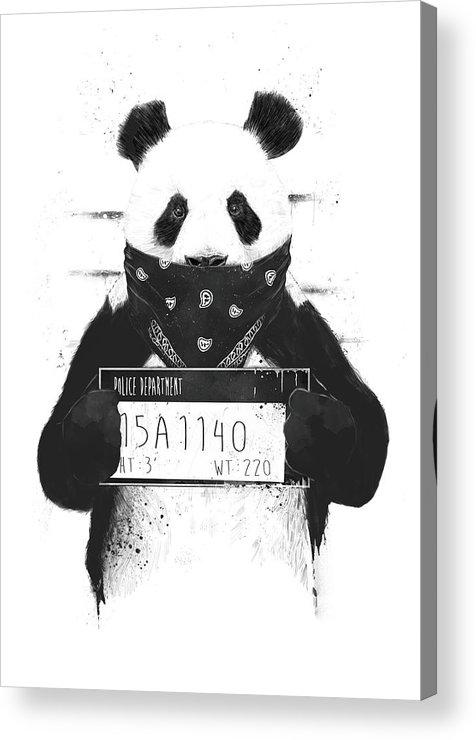Panda Acrylic Print featuring the drawing Bad Panda by Balazs Solti