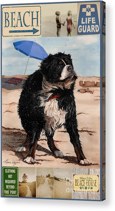 Bernese Mountain Dog Acrylic Print featuring the painting Dog Days Of Summer V2 by Liane Weyers
