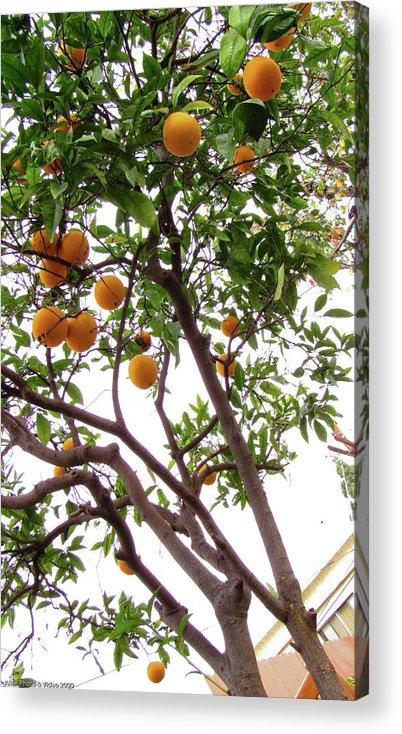 Trees Acrylic Print featuring the photograph One California Winter by Ariel Boroda