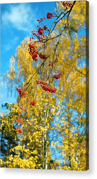 Tree Acrylic Print featuring the photograph Untitled by Vadim Grabbe