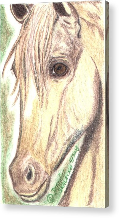 Horse Acrylic Print featuring the drawing Flirt by Jennifer Skalecke