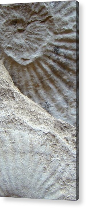 Fossil Acrylic Print featuring the photograph Fossil Two by Ana Villaronga