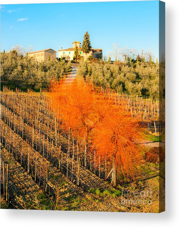 Vineyard Acrylic Print featuring the photograph Tuscany Landscape by Luciano Mortula