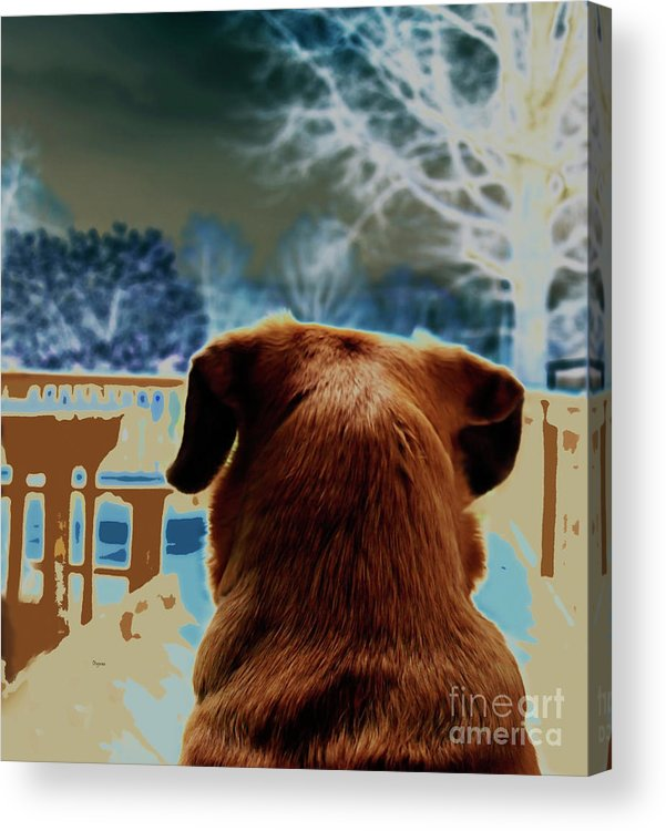 Dogs Acrylic Print featuring the photograph From Her Perspective  by Steven Digman