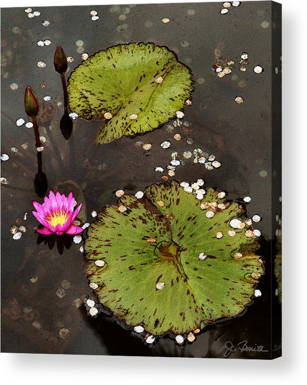 Serene Acrylic Print featuring the photograph Serenity by Joe Bonita