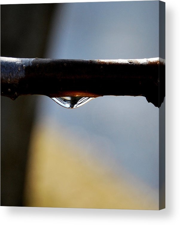 Rain Drop Acrylic Print featuring the photograph Single Drop by Marilynne Bull