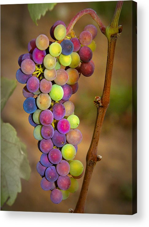 Grapes Acrylic Print featuring the photograph Jewel Tones by Jean Noren