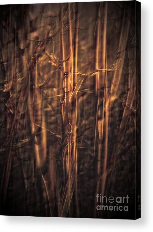 Art Acrylic Print featuring the photograph Autummn's Promise 13 by Joe Mamer