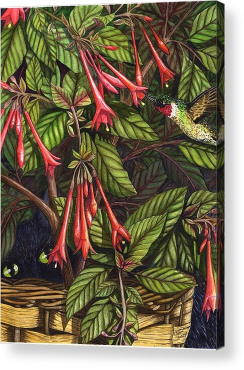 Fuchsia Acrylic Print featuring the painting Lurking by Catherine G McElroy