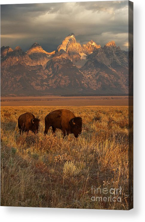 Grand Teton Acrylic Print featuring the photograph Morning Travels In Grand Teton by Sandra Bronstein