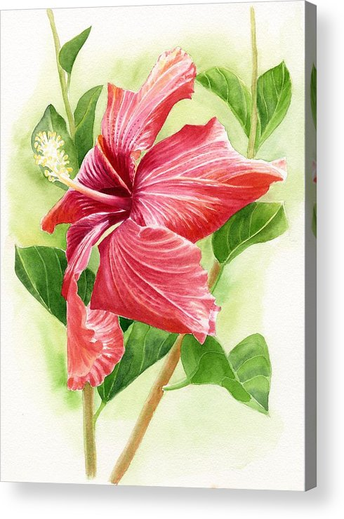 Red Acrylic Print featuring the painting Red Orange Hibiscus by Sharon Freeman