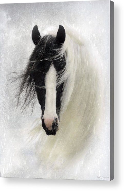 Horses Acrylic Print featuring the photograph Wisteria by Fran J Scott