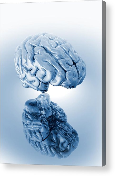 Artwork Acrylic Print featuring the photograph Human Brain, Artwork by Victor Habbick Visions