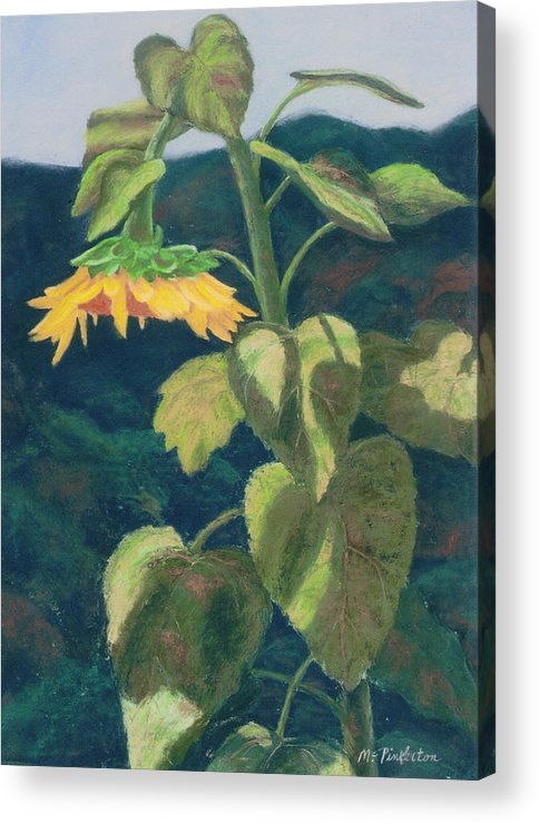 Flower Acrylic Print featuring the painting Sunflower by Miriam Pinkerton