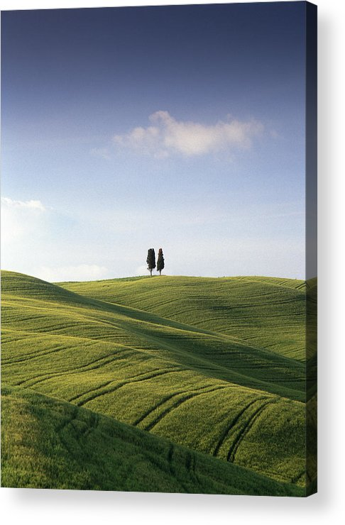 Photograph Acrylic Print featuring the photograph Twin Cypresses by Michael Hudson