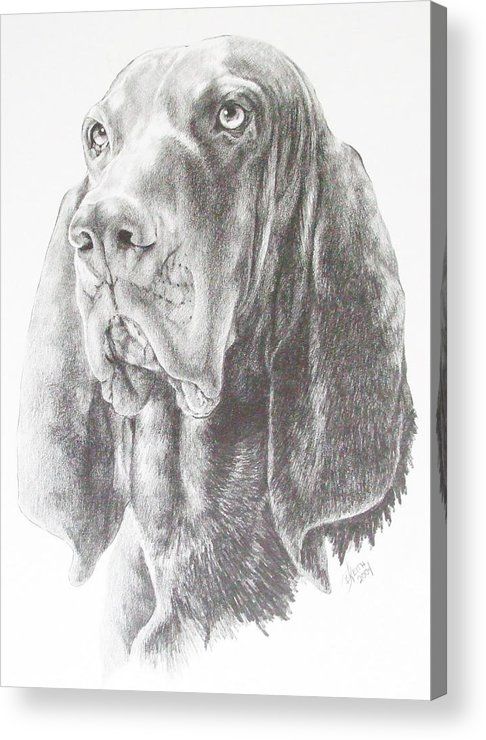 Purebred Dogs Acrylic Print featuring the drawing Black And Tan Coonhound by Barbara Keith