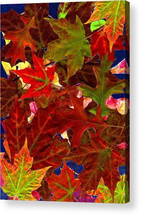 Collage Acrylic Print featuring the photograph Autumn Leaves by Nancy Mueller