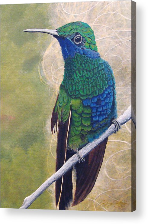 Humming Bird Acrylic Print featuring the painting Beija Flor And Nest by Jeffrey Oldham