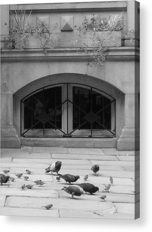 Pigeons Acrylic Print featuring the photograph Boston Scene by Nancy Ferrier