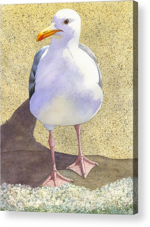 Seagull Acrylic Print featuring the painting Chilly by Catherine G McElroy