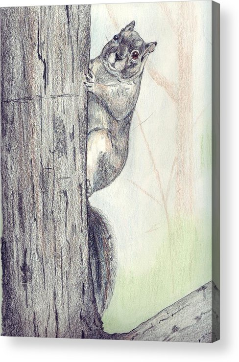 Color Pencil Acrylic Print featuring the drawing Feeder Raider by Debra Sandstrom