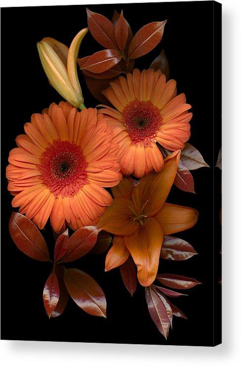 Floral; Botanical; Scanner Photography; Scanograph; Gerbera Acrylic Print featuring the photograph Gerbera Cluster by Marsha Tudor