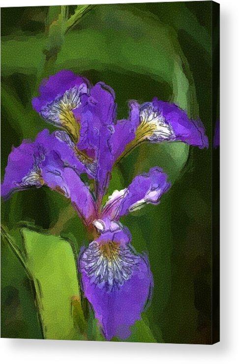 Digital Photograph Acrylic Print featuring the photograph Iris II by David Lane