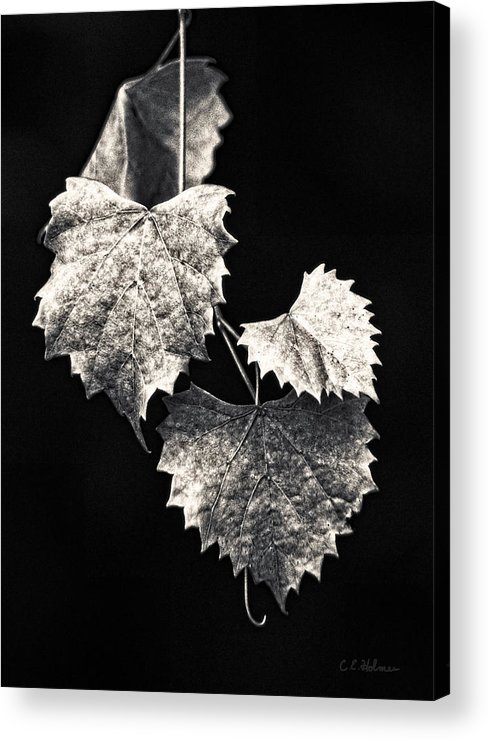 B&w Acrylic Print featuring the photograph Leaves by Christopher Holmes