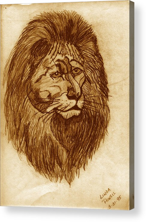 Drawing Acrylic Print featuring the digital art Lion by Linda Powell