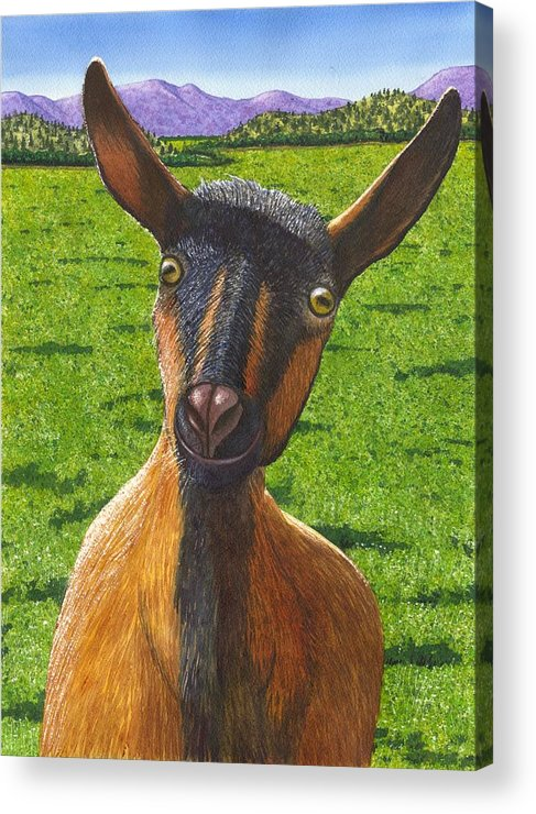 Goat Acrylic Print featuring the painting Little Goat by Catherine G McElroy