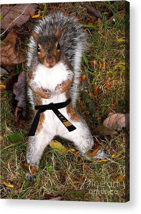 Squirrel Acrylic Print featuring the photograph Make My Day by Jeff Breiman